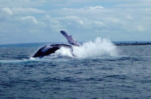 Ocean Safari: Whale Watching