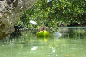 Ilha das Cobras: Island Wilderness Adventure